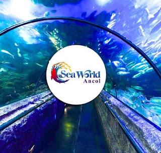 Tiket Seaworld Ancol