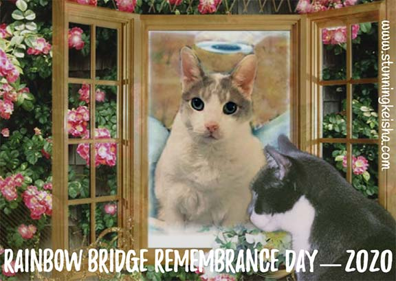Rainbow Bridge Remembrance Day