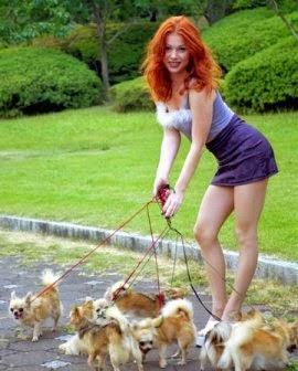pasear perros puede ser un negocio muy rentable