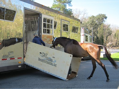 The Need to Transport Horses and The Role of Equine Transportation Companies