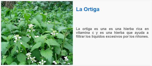 La ortiga es una es una hierba rica en vitamina c y es una hierba que ayuda a filtrar los líquidos excesivos por los riñones