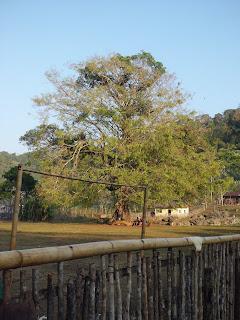 desa nggalak kabupaten manggarai ntt