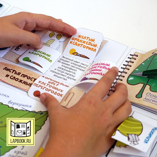 лэпбук по ботанике - шаблоны для распечатки