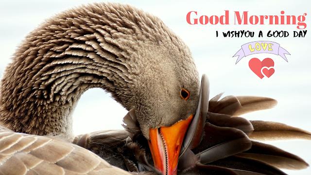 vary beautiful bird  Good Morning  Images.