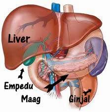 Obat Liver Bengkak Tanpa Operasi
