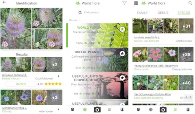 PlantNet: Αναγνωρίστε την χλωρίδα γύρω σας, σκανάροντας φυτά με το κινητό