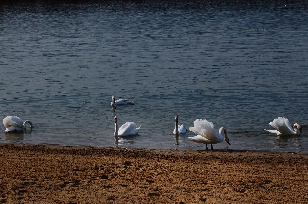 Olsztyn, jezioro Krzywe / Ukiel