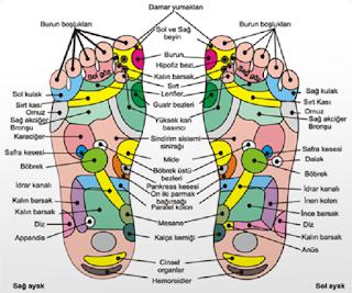 Tüm Organlar Ayak Tabanına Bağlı