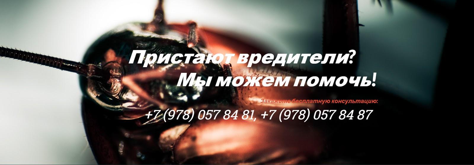 ООО Сандезпост. Дезинсекция, дератизация, дезинфекция Севастополь, Крым