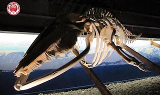 Museo de las ballenas en Húsavík