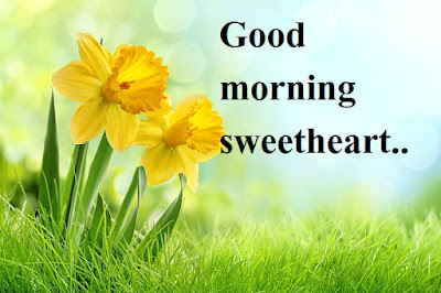 good morning images for girlfriend lover - Daffodil flower images