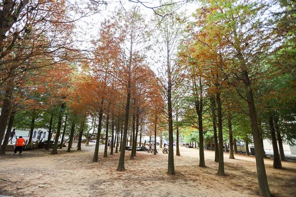 南投139線八卦路落羽松森林還有木馬可以坐,IG網美拍照打卡景點