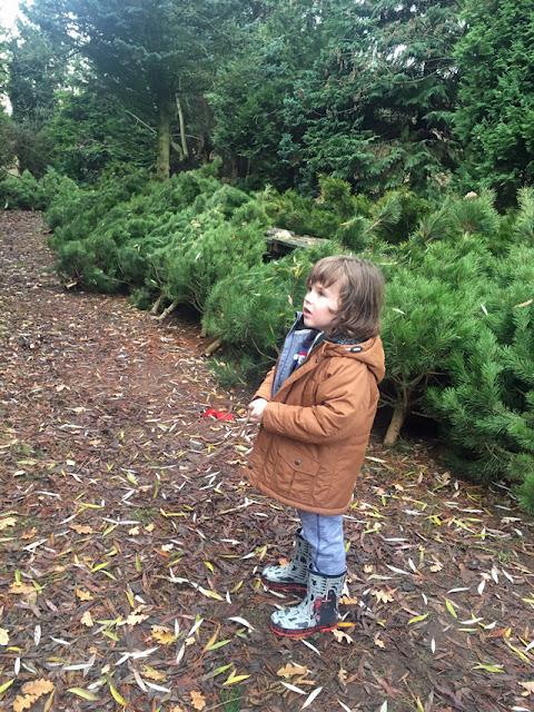 looking at Christmas trees