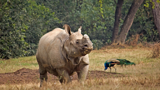 National Rhino Conservation Strategy