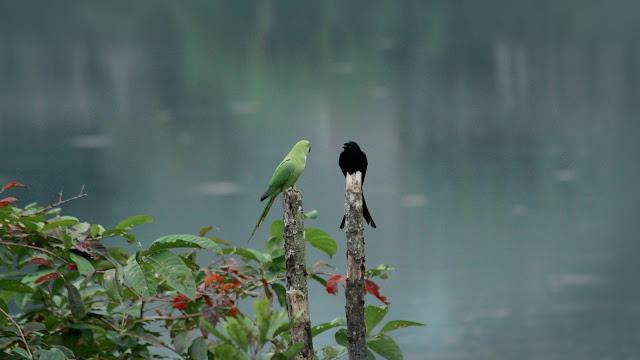 Images of Kerala