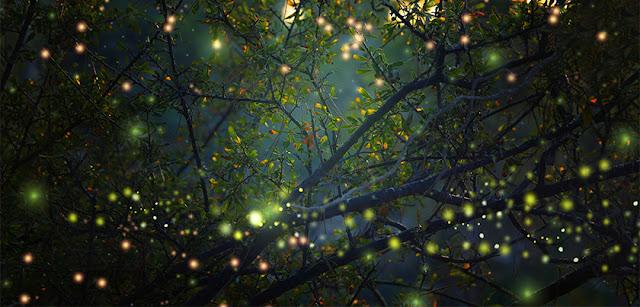 natural beauty, nature inspiration,