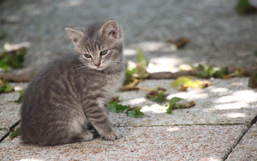 kitten pictures - kitten images - kitty pictures - cute kitten pictures