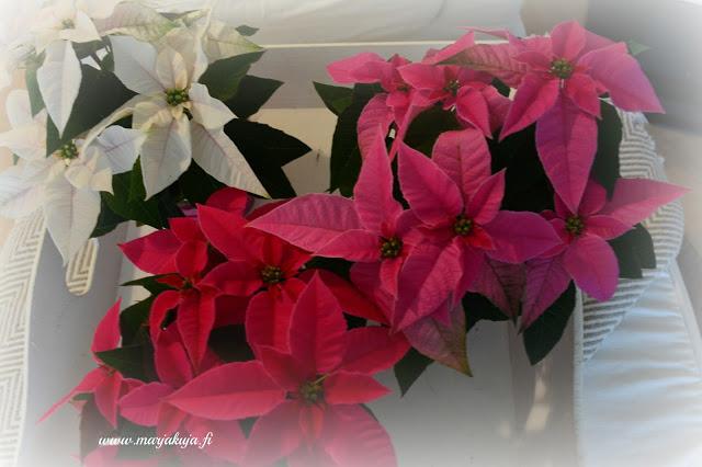 erivariset joulutahdet