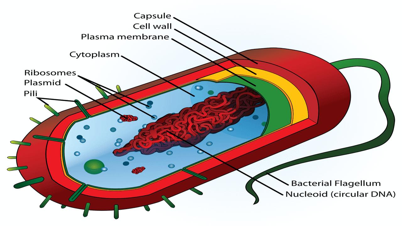 Perbedaan Antara Virus Dengan Bakteri