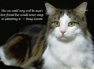 quotes the cat very will be man's.