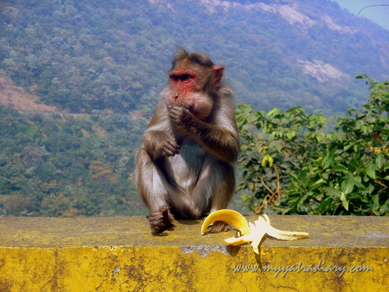 Monkeys on the Mumbai-Pune Expressway