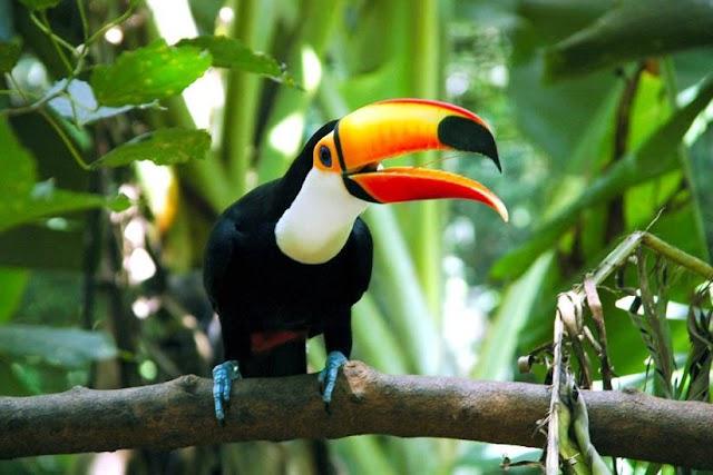 Parque das Aves supera as expectativas e recebe 8.061 visitantes no Feriadão