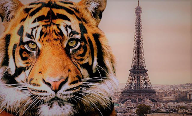 eiffel tower,paris,france,france news,paris news,tiger in paris,tiger,information technology,latest news,news,today news,breaking news,current news,world news,latest news today,top news,online news,headline news,news update,news of the day,hot news,technews,techlightnews,update news
