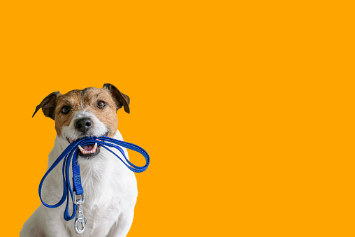 House Training Your Dog – The Steps to Take