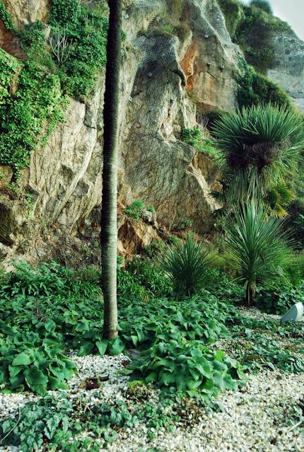 Palms in Royal Terrace