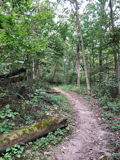A natural trail heads into the lush forest at Robert O Cook Memorial Arboretum