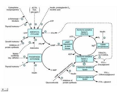 Penjelasan Singkat Mengenai Proses Metabolisme Protein Dalam Tubuh Kita