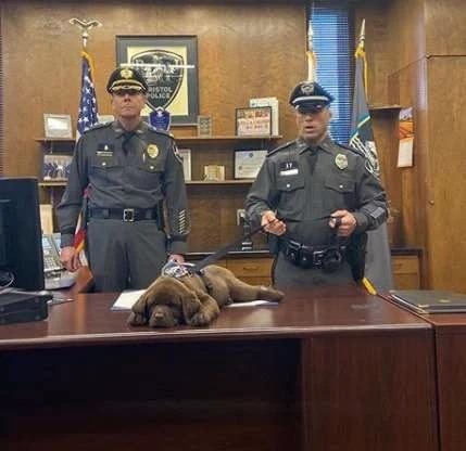 Cachorro se queda dormido durante toda su ceremonia de juramento como policía
