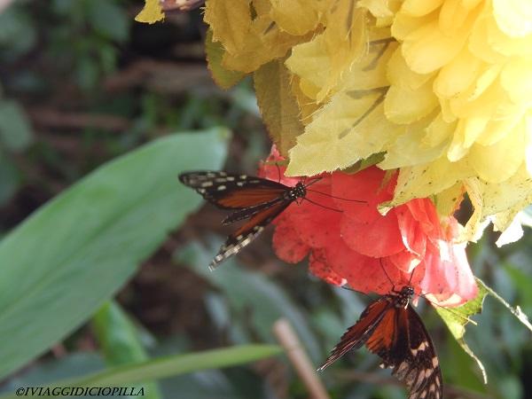 Casa delle farfalle Montegrotto