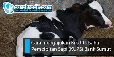 Kredit Usaha Pembibitan Sapi (KUPS) Bank Sumut