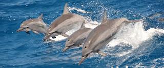 10 curiosidades sobre los delfines