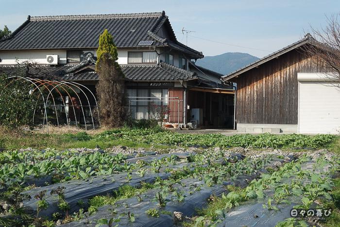 Un potager sur le chemin du parc Yoshinogari, Saga