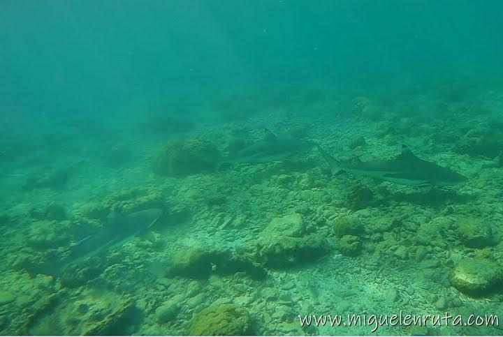 Tiburones en Shark Point, Phi Phi Don