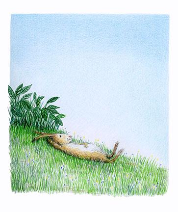 daydream hare illustration yara dutra