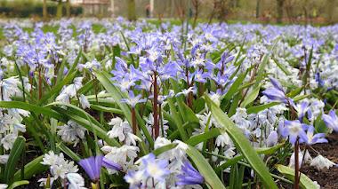 Mariposas en el jardín de primavera con bulbos de flor