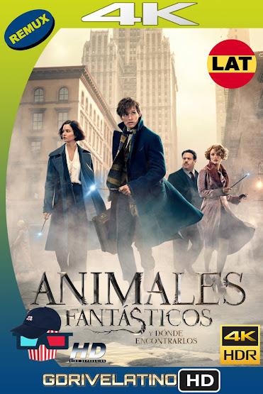 Animales Fantásticos y Dónde Encontrarlos (2016) BDRemux 4K HDR Latino-Ingles MKV