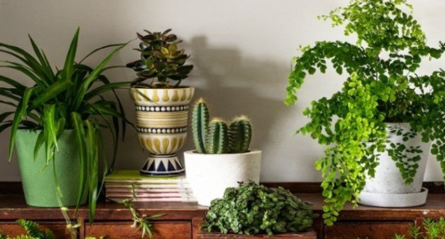 Having Plants At Home Allows You To Live Longer, According To The Researchers