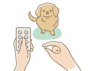 cães tomando medicamentos