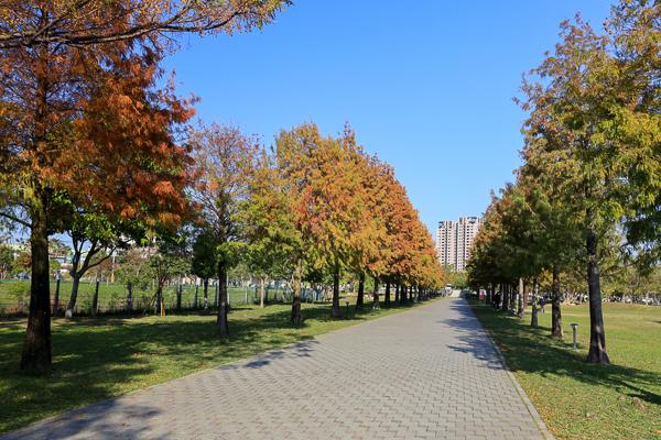 台中北屯南興公園(萬坪公園)落羽松大道和米奇樹,休閒好去處