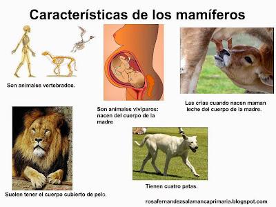 Resultado de imagen de los cuerpos de los mamiferos