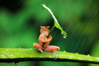 Tierna imagen de ranita con paraguas - imagenes de sapos y ranas