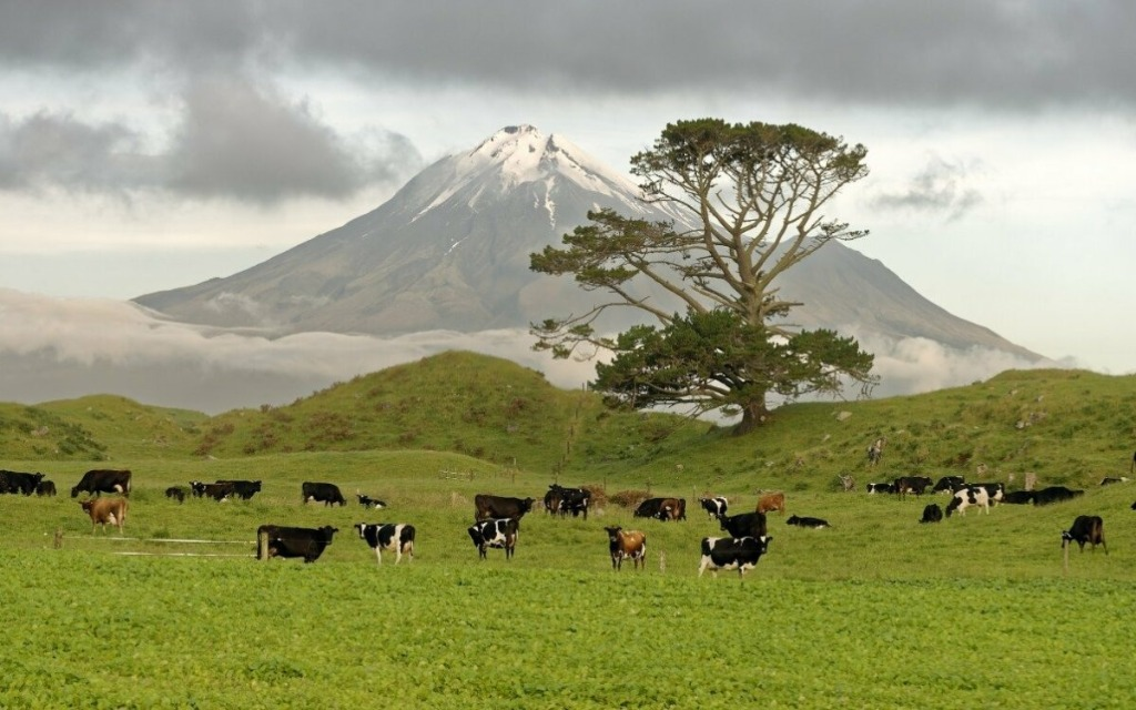 all about new zealand