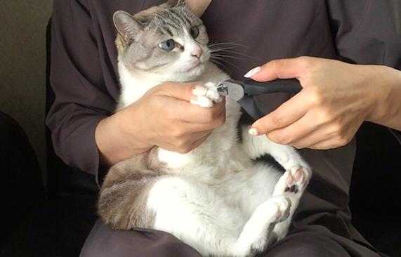Comment couper les ongles de votre chat ?