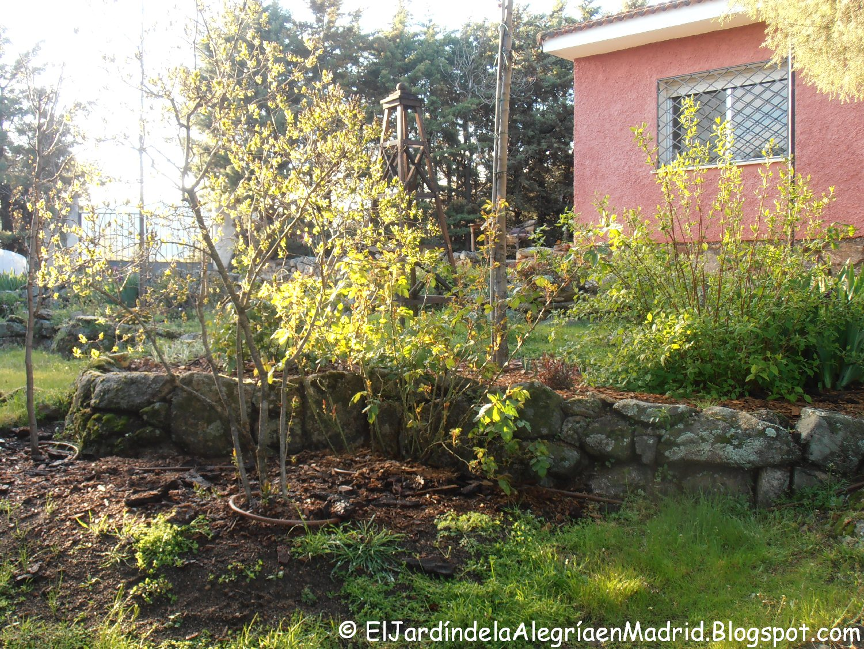 El jard n de la alegr a alrededor de uno de los enebros for El jardin de la alegria cordoba