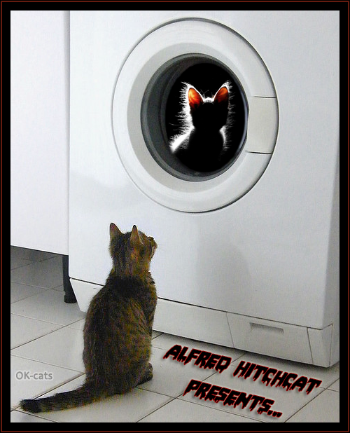 "Photoshopped Cat picture • Alfred Hitchcat presents ""The mysterious creepy kitten in the washing machine."""