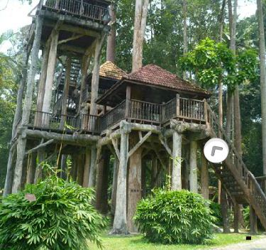 EightGames Mushroom Tree …
